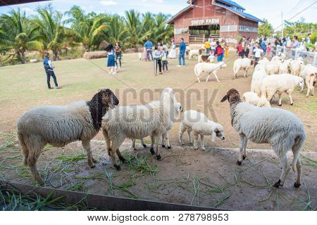 Sheep In A Meadow On Green Grass At Farm.
