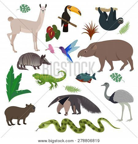 Animal In South America Vector Wild Animalistic Mammal Character Capybara Tapir Toucan In Southern W
