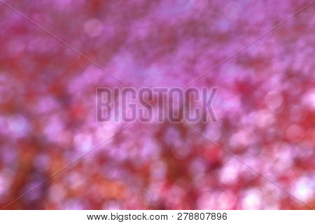 Red And Pink Bokeh Background, Valentine Background.