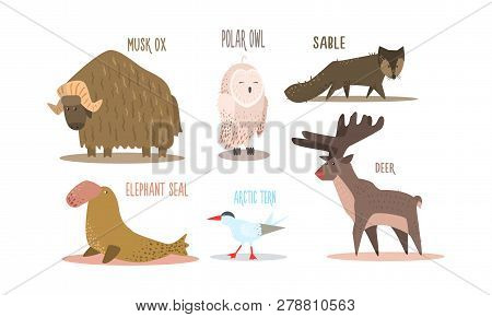 Collection Of Arctic Animals With Names, Polar Owl, Musk Ox, Sable, Elephant Seal, Arctic Tern, Deer