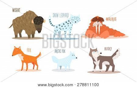 Collection Of Arctic Animals With Names, Wisent, Snow Leopard, Walrus, Fox, Arctic Fox, Husky Vector