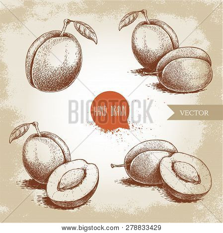 Hand Drawn Plums Set. Single, Whole And Group Compositions. Collection Of Retro Style Fruits. Vector