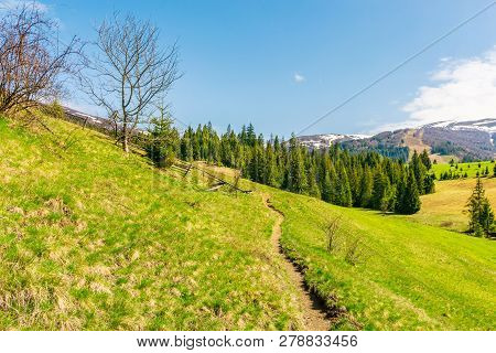 Beautiful Countryside In Springtime. Footpath Through Grassy Hill. Spruce Trees On A Meadow. Distant