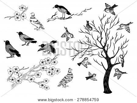 Illustration Of Hand Drawn Magpies, Sparrows, Pigeons And Trees Isolated