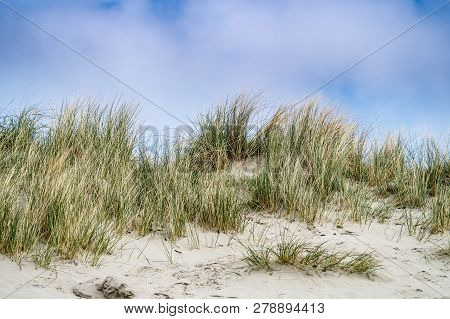 A Beautyfull Sand Dune At The North Sea Coast With Grass