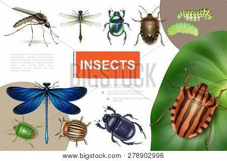 Realistic Insects Colorful Composition With Colorado Beetle On Potato Leaf Dragonflies Caterpillars