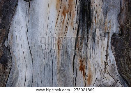 Gray Wooden Texture Of Dry Old Wood With Black Cracks