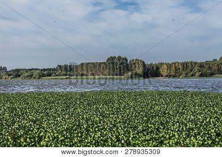 View Of Lake Of Pateira Fermentelos In Albergaria City, Portugal