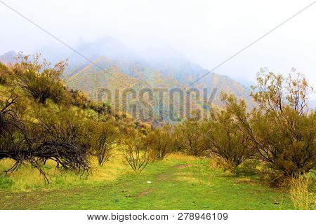 Creosote Bush Besides A Grassy Field Surrounded By Fog Taken In The Rural Colorado Desert During A R