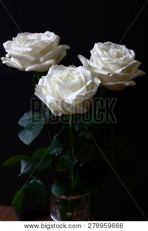 Three White Contrast Flowers Of A Rose On A Black Background.