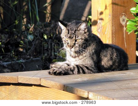 Cat On A Wooden Bridge