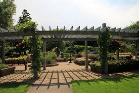 The Summer Landscape In The Park With Pergola