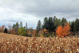 Autumn landscape with