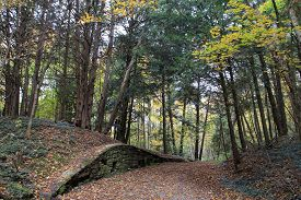 The Trail And Wall In The Fall Forest