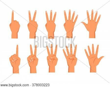 Set Of Vector Hands Showing Fingers. Front And Back View Of Palm With Fingers Counting. Sign For One