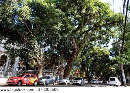 Salvador, Bahia / Brazil - January 30, 2017: View Of The Giant Mango Tree Located In The Vitoria Cor