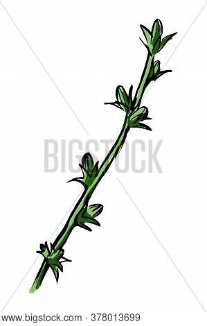Green Flower Stem With Buds Sketch. Hand Drawn Vector Illustration Isolated On White Background.
