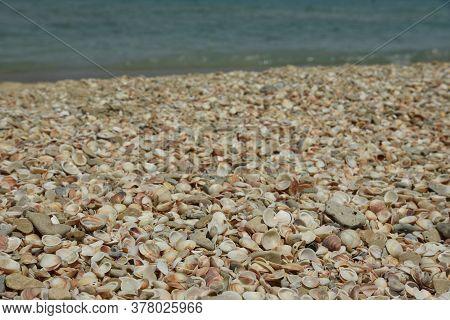 Seashells And Seastar On The Sand Of A Beach, Seashore In Sea Shells.