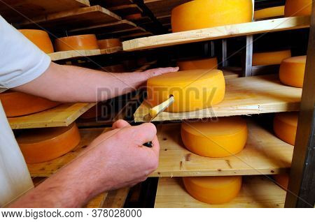 Quality Control In The Process Of Cheese Ripening In Industrial Food Production