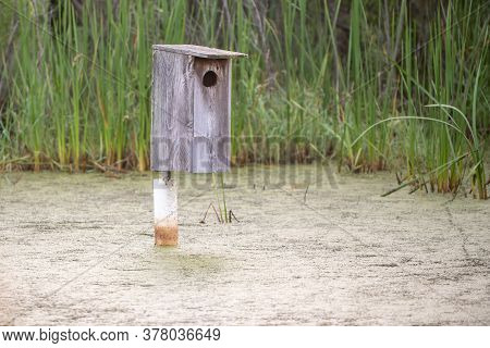 A Bird House That Is Located Inside A Marsh To Promote The Sustainment Of Some Birds