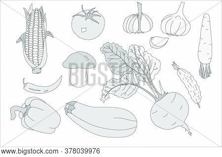 A Sketch On The Theme Of Vegetables. Background From Vegetables. For Design. Vector