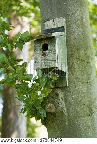 Wooden Bird Box, Nest Box Or Nesting Box Hanging On A Tree Trunk, Uk