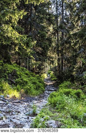 Footpath In Coniferous Forest, High Tatras Mountains, Slovak Republic. Hiking Theme. Seasonal Natura