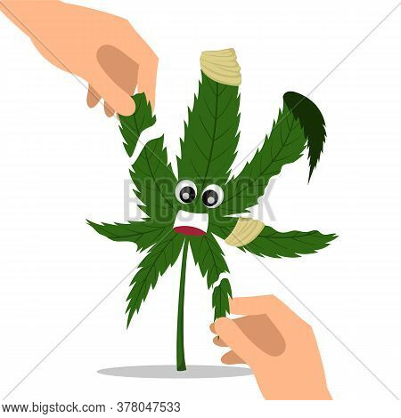 Hands Tear A Cannabis Leaf. Vector Illustration Of A Mutilated Cannabis Leaf, Torn Leaf.