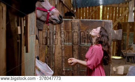 Young Woman In Pink Dress Feeding Brown Horse In Paddock