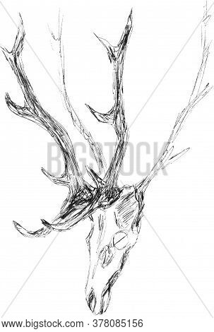 Hunting Trophy, Wall Decoration, Antlers And Skull Of A Deer, Graphic Black And White Pattern, Trave