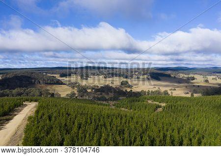 A Pine Forest Under A Cloudy Blue Sky