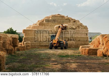 Machinery Stacking Hay Bales In Farm Field. Tractor Storing Bails Of Hay. Harvest Time. Farmer Harve