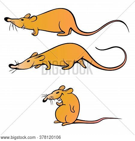The Rat Is Yellow As A Symbol Of 2020. Vector Illustration. Cartoon Rat
