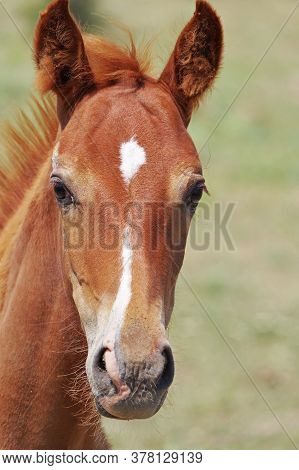 Portrait Of A Beautiful Foal On A Summer Morning
