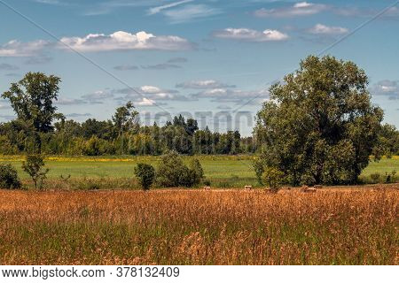 Autumn Nature In The Forest Steppe Part Of Russia
