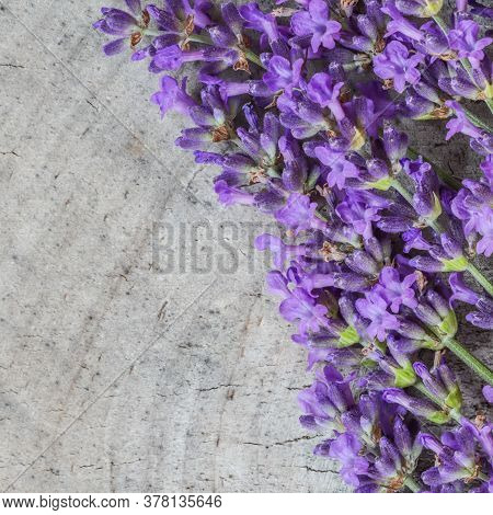 Lavender Flowers On A Gray Rustic Background Of An Old Stump