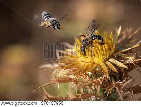 Bee Sucking On A Flower While Another Comes Flying.