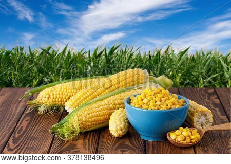 Fresh Corn Cobs And Canned Seeds In Blue Ceramic Bowl On Wooden Table With Green Maize Field On The