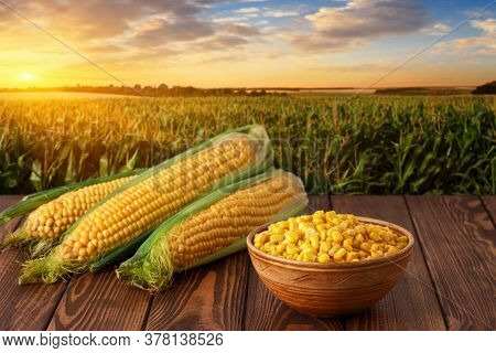 Fresh Corn Cobs And Canned Seeds In Clay Bowl On Wooden Table With Green Maize Field On The Backgrou