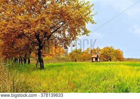 Autumn foggy landscape - old oak trees autumn grove and lonely small house in foggy cloudy autumn weather, soft focus processing, autumn landscape scene, autumn October nature. Autumn October background