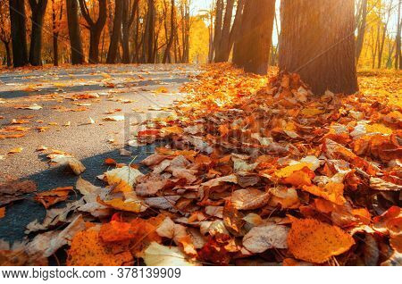Autumn fallen leaves in the autumn park. Focus at the autumn leaves on the ground, fallen autumn leaves, closeup. Autumn landscape with fallen autumn leaves, autumn leaves background.