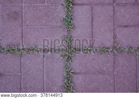 Green Grass Protruding Through The Slit In The Outdoor Tile