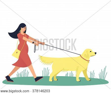 A Woman Walks With Her Beloved Dog, The Labrador Retriever. Walk With Your Beloved Pet. A Large Stro