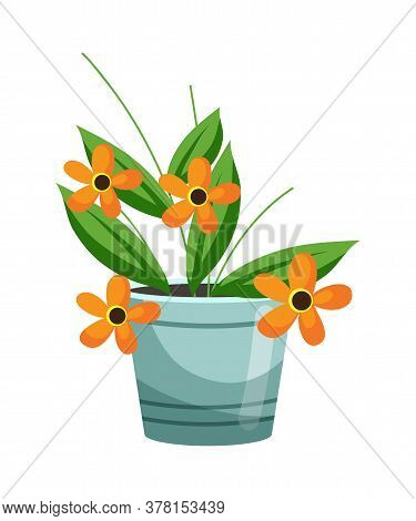 Floristic Composition For Present Or Gift. Floral Shop Assortment. Blooming Orange Flower Growing In