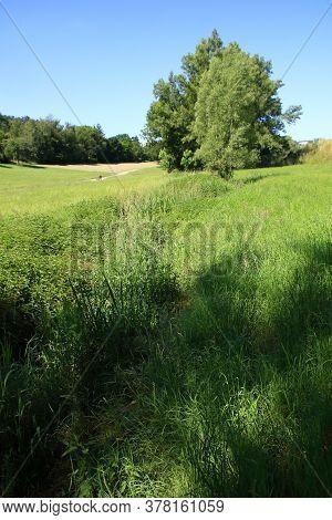 Overgrown Watercourse In Heckengäu Near Weissach In The Sunshine