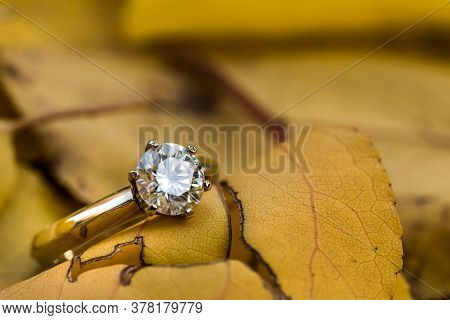 Gold Diamond Ring On Autumn Leaves. Precious Jewelry Ring
