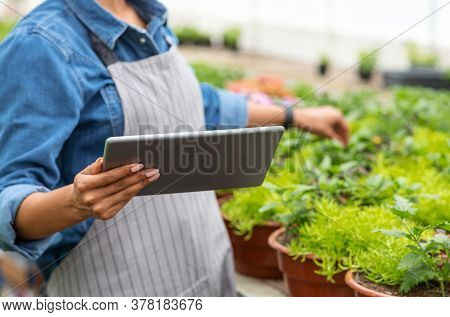 Modern Plant Care In Smart Greenhouse. African American Girl In Apron Checks Flowers And Looks At Ta
