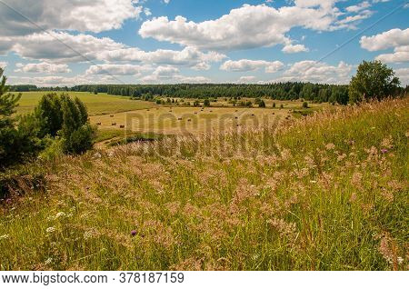 Landscape Of Green Hills, View Of The Field, Forest In The Distance. Field At The Bottom Of The Hill