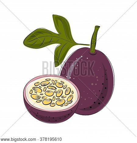 Vector Set Of Passion Fruit, Passionfruit, Maracuya Purple Colors. Whole And Cut Pieces On A White B