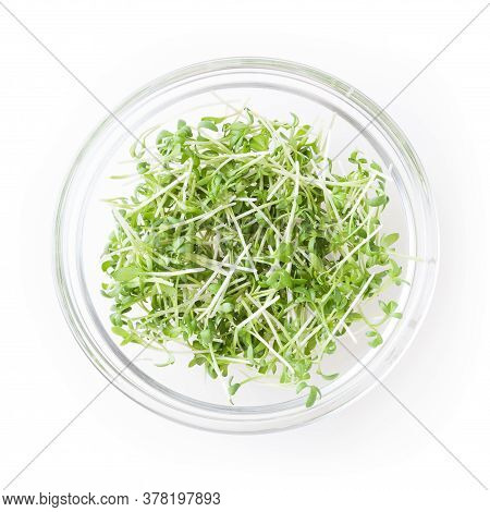 Micro Greens Garden Cress Sprouts In Glass Bowl Isolated On White Background With Clipping Path